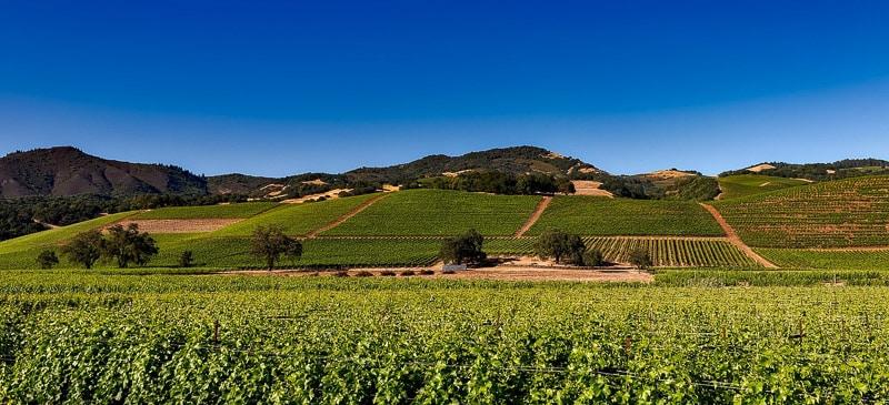best wine travel destinations
