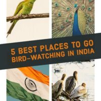 5 Bird Watching Sites across India You Must Visit