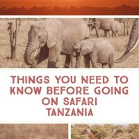 A Complete Guide to Safari in Tanzania