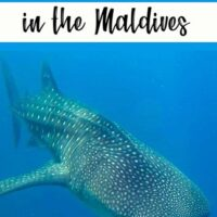 Travel Guide to Dhigurah island in the Maldives on a whim turned out to be every bit the exciting adventure I hoped for.underwater, diving,padi, whale shark