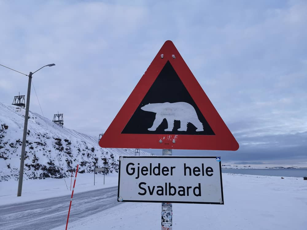 Polar bear sign longyearbyen svalbard