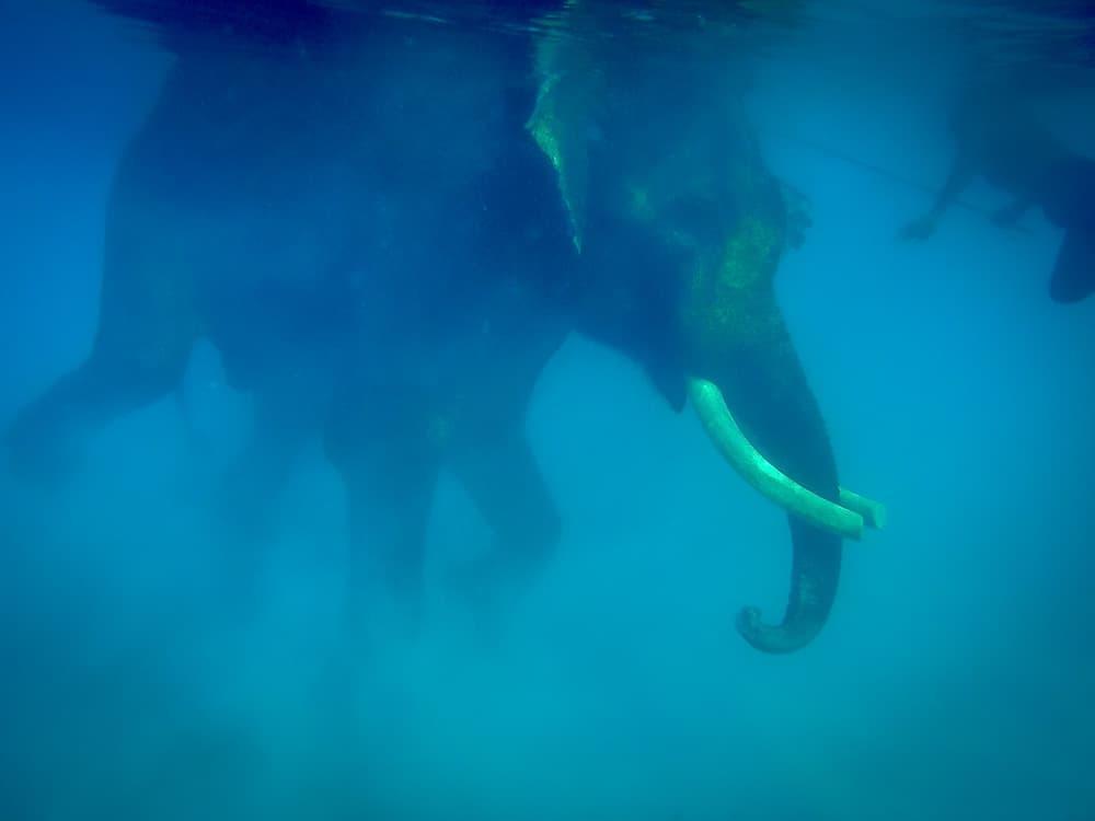 diving elephant andaman island india