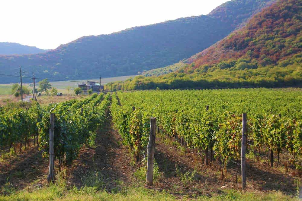 Kakheti Valley Georgia