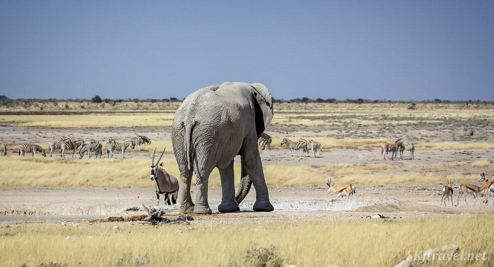 Elephants Etosha National Park
