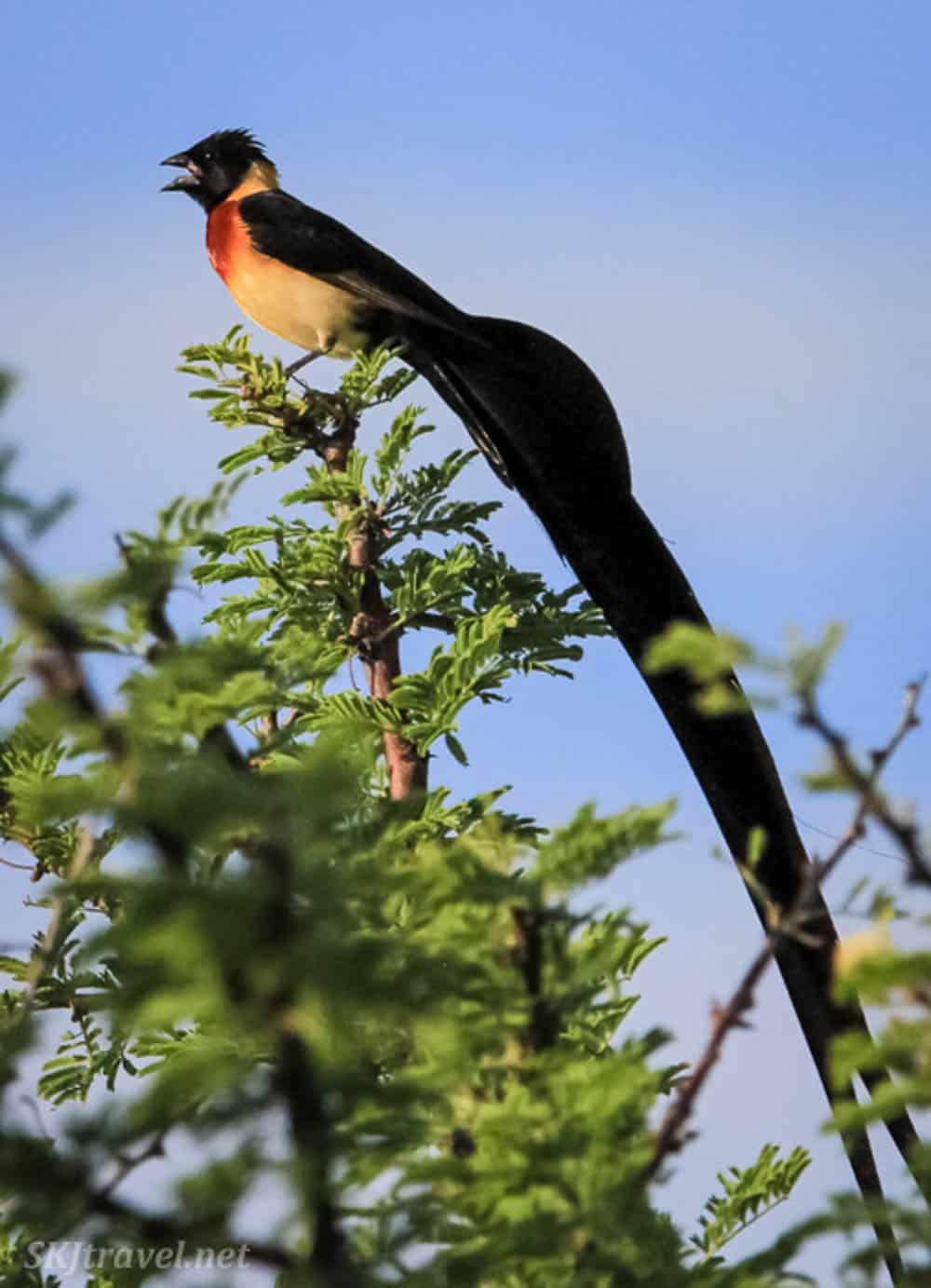 Etosha National Park birds