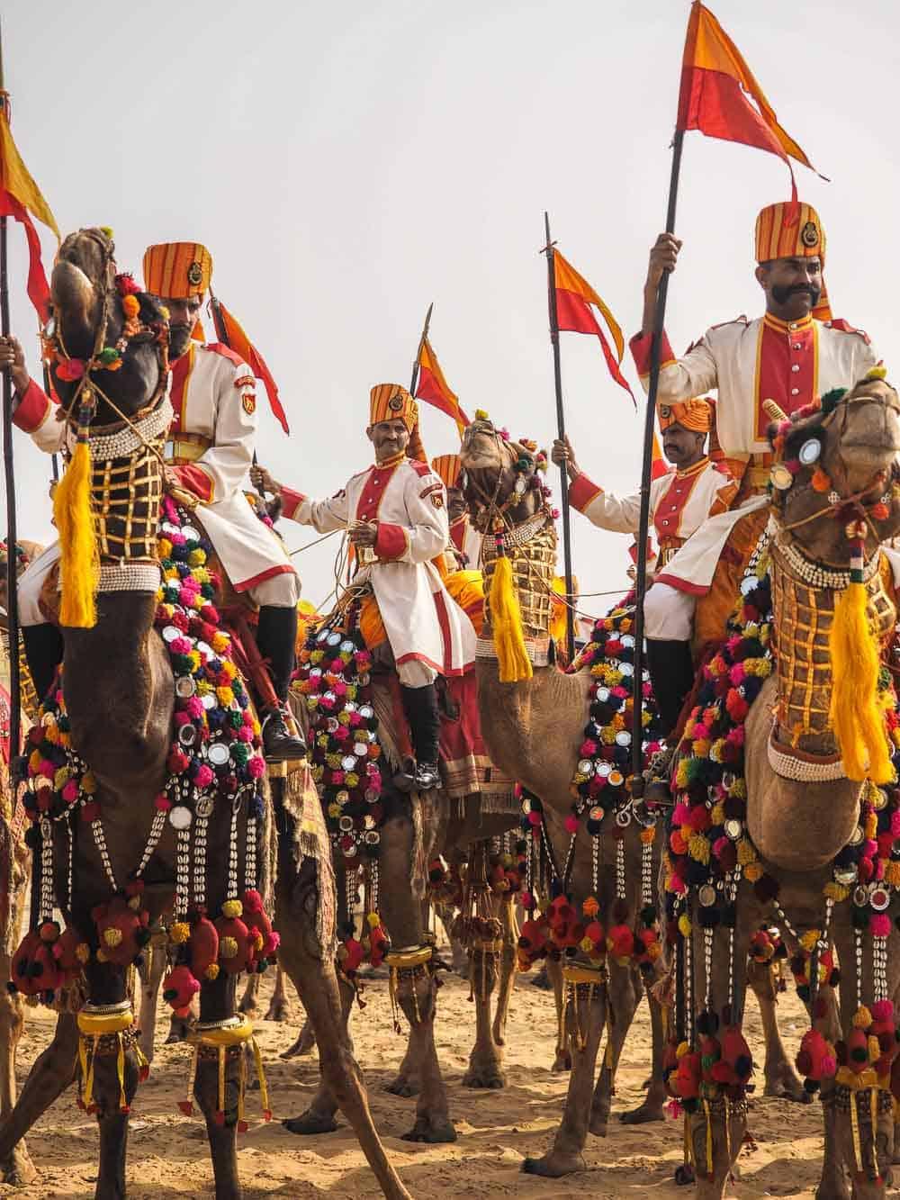 Rajasthan india camels
