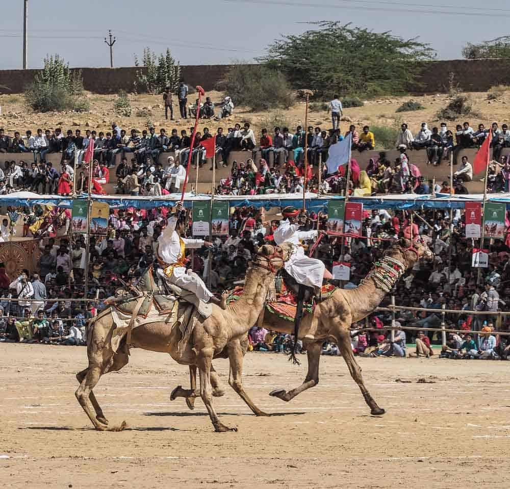 camel polo india
