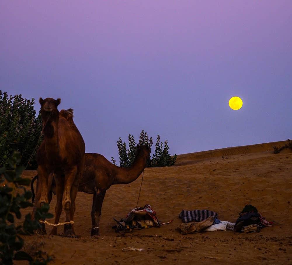 Jaisalmer Desert Safari