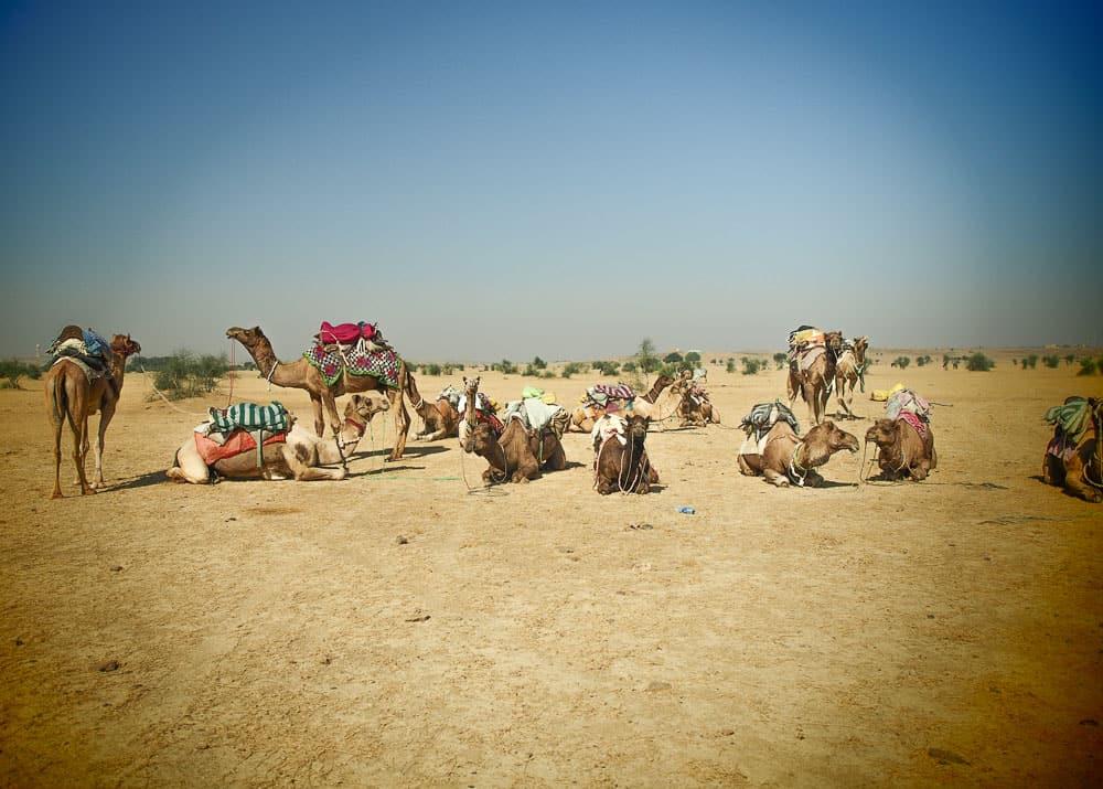 desert safri india