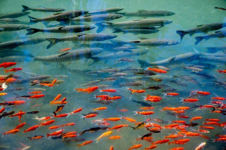 fish yunnan china