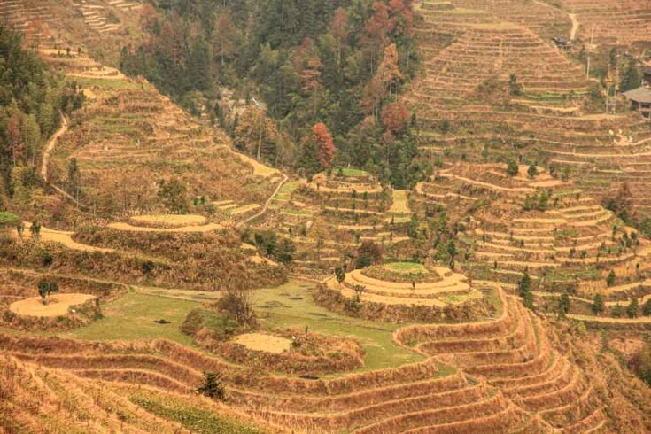 Longsheng/Longji Rice Terraces dragon´s backbone china
