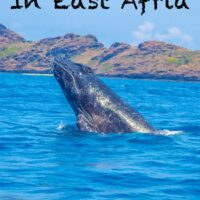 Travel Guide To Moheli Island in Comoros, east africa one of the best places to swim with humpback whales