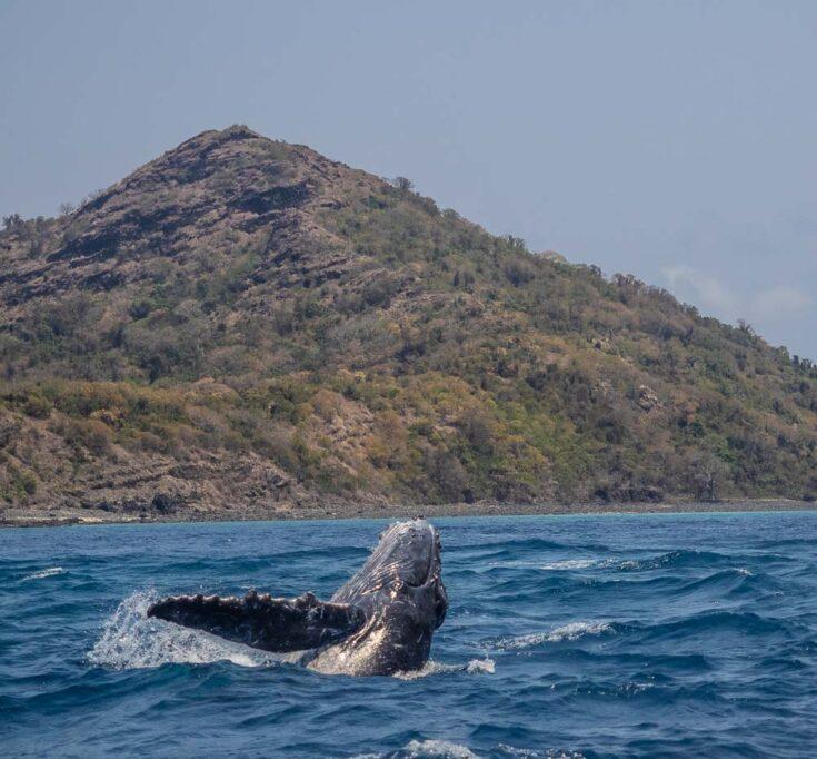 whale comoros africa