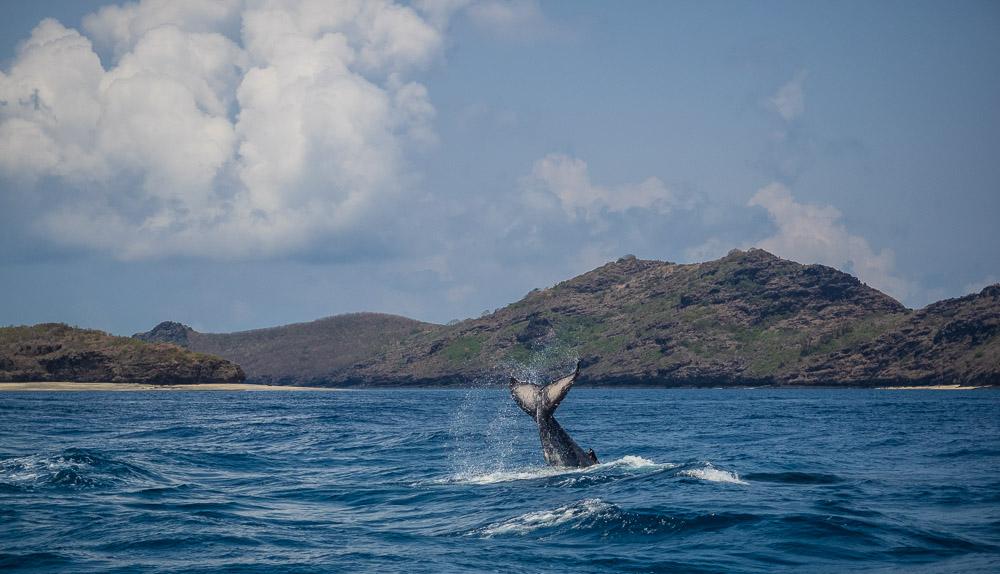 whale comoros